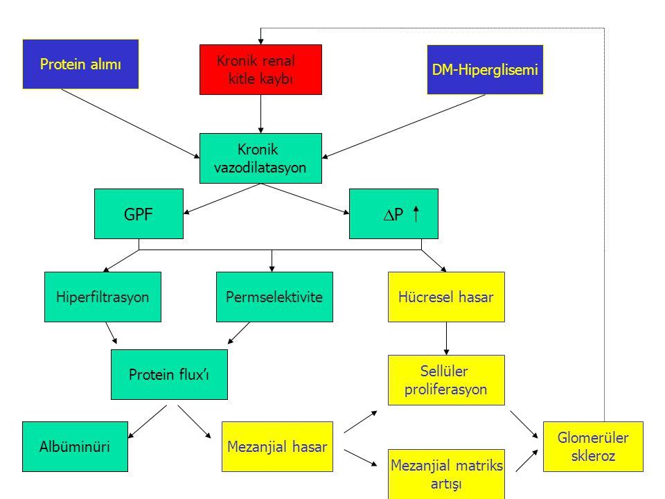 GPF P Protein alımı Kronik renal kitle kaybı DM-Hiperglisemi Kronik