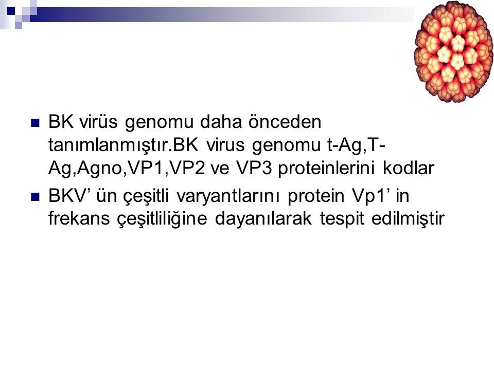 BK virüs genomu daha önceden tanımlanmıştır
