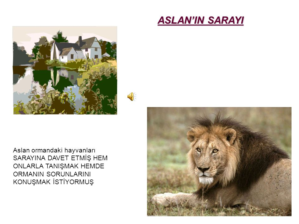 ASLAN'IN SARAYI Aslan ormandaki hayvanları SARAYINA DAVET ETMİŞ HEM ONLARLA TANIŞMAK HEMDE ORMANIN SORUNLARINI KONUŞMAK İSTİYORMUŞ.