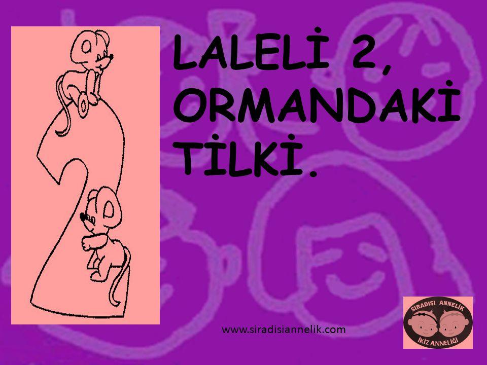 LALELİ 2, ORMANDAKİ TİLKİ. www.siradisiannelik.com