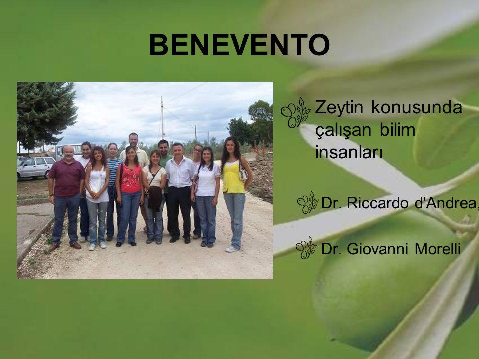 BENEVENTO Zeytin konusunda çalışan bilim insanları