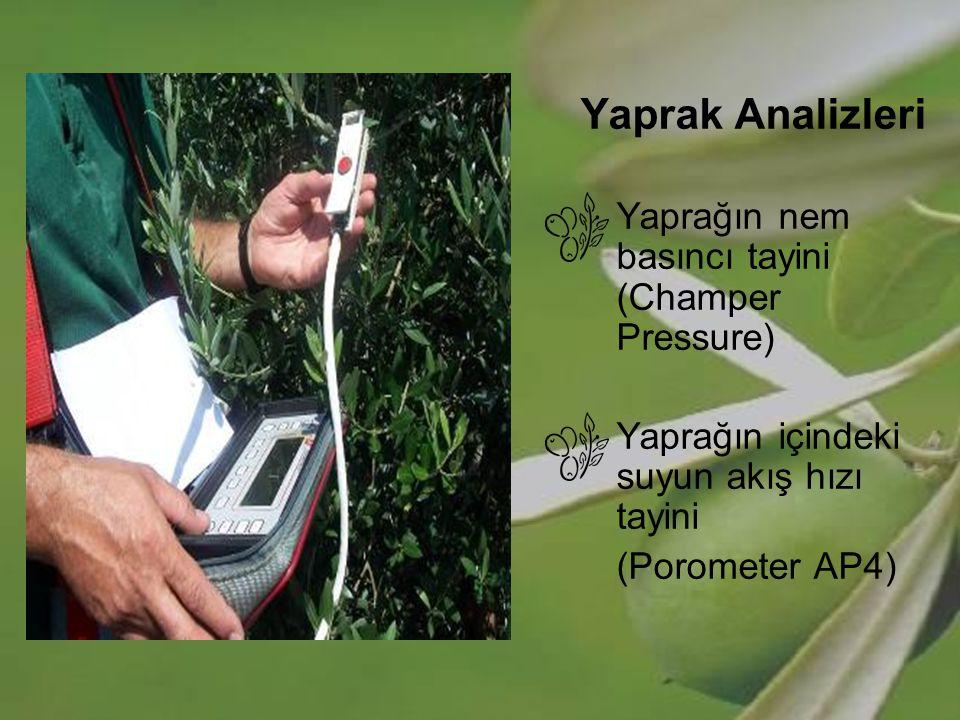 Yaprak Analizleri Yaprağın nem basıncı tayini (Champer Pressure)