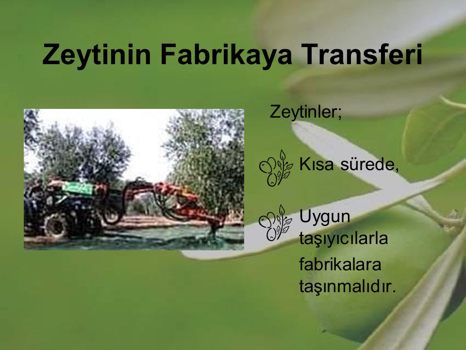 Zeytinin Fabrikaya Transferi