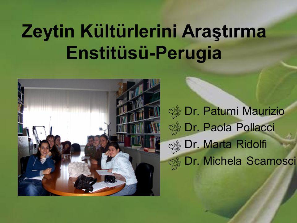 Zeytin Kültürlerini Araştırma Enstitüsü-Perugia