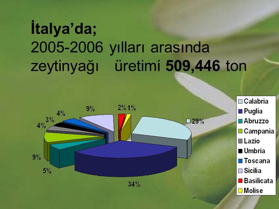 İtalya'da; 2005-2006 yılları arasında zeytinyağı üretimi 509,446 ton