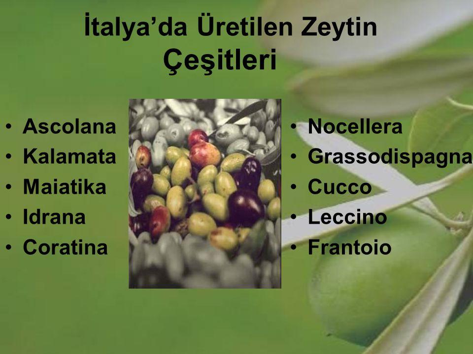 İtalya'da Üretilen Zeytin Çeşitleri