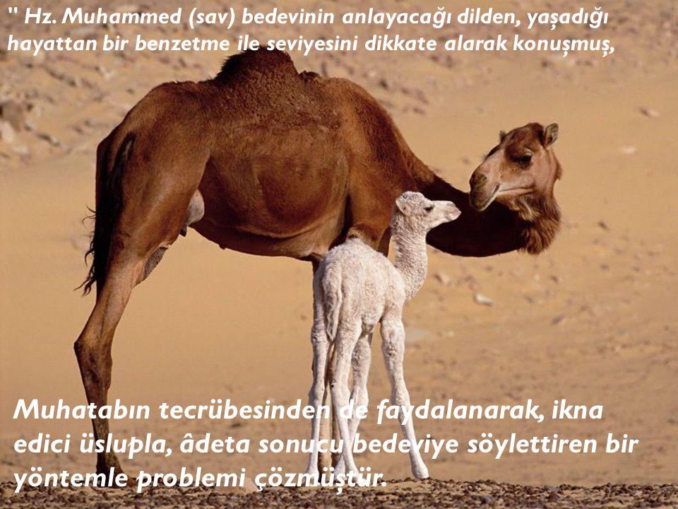 Hz. Muhammed (sav) bedevinin anlayacağı dilden, yaşadığı hayattan bir benzetme ile seviyesini dikkate alarak konuşmuş,