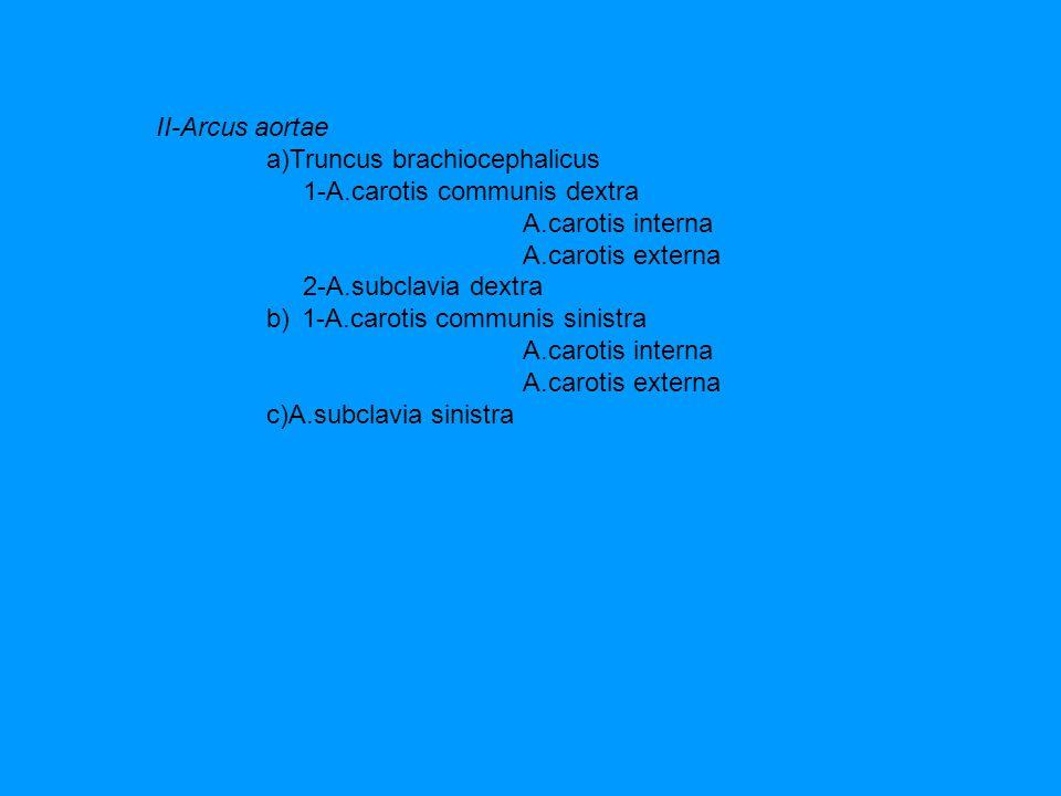 II-Arcus aortae a)Truncus brachiocephalicus. 1-A.carotis communis dextra.