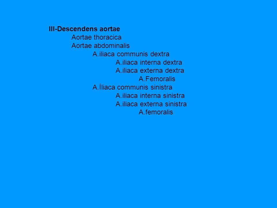 III-Descendens aortae