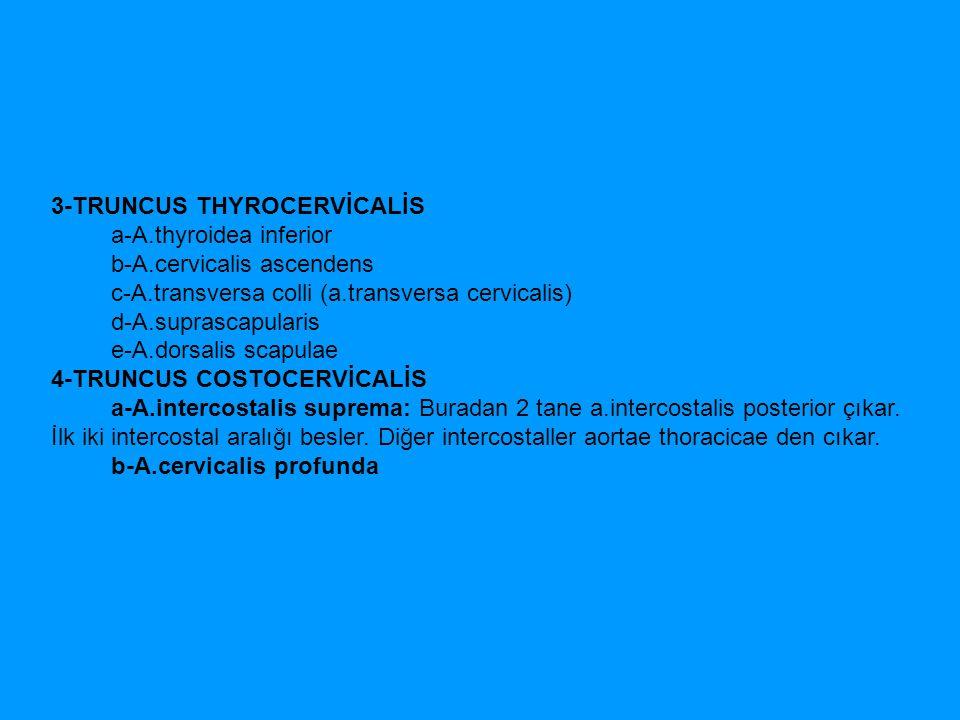 3-TRUNCUS THYROCERVİCALİS