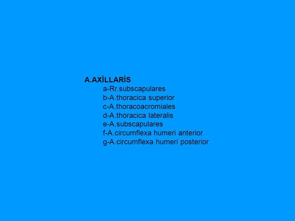 A.AXİLLARİS a-Rr.subscapulares. b-A.thoracica superior.