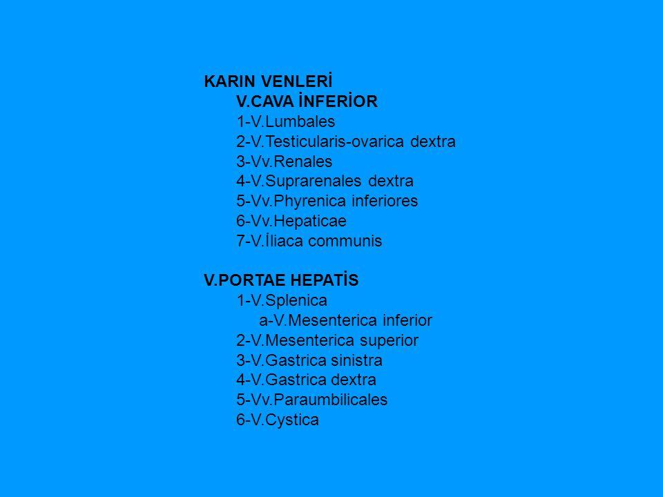 KARIN VENLERİ V.CAVA İNFERİOR. 1-V.Lumbales. 2-V.Testicularis-ovarica dextra.