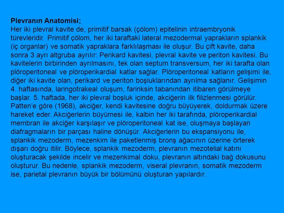 Plevranın Anatomisi;