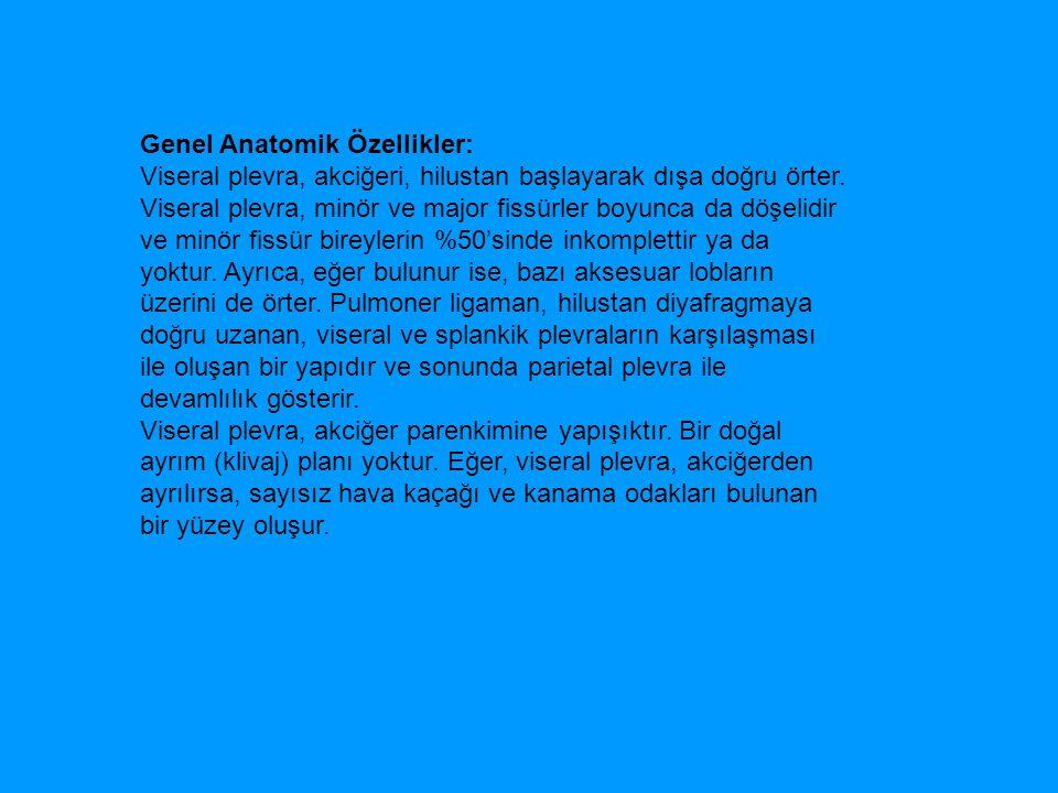 Genel Anatomik Özellikler:
