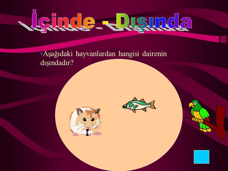 İçinde - Dışında Aşağıdaki hayvanlardan hangisi dairenin dışındadır