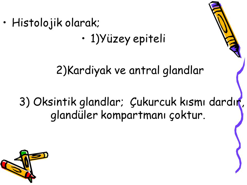 2)Kardiyak ve antral glandlar