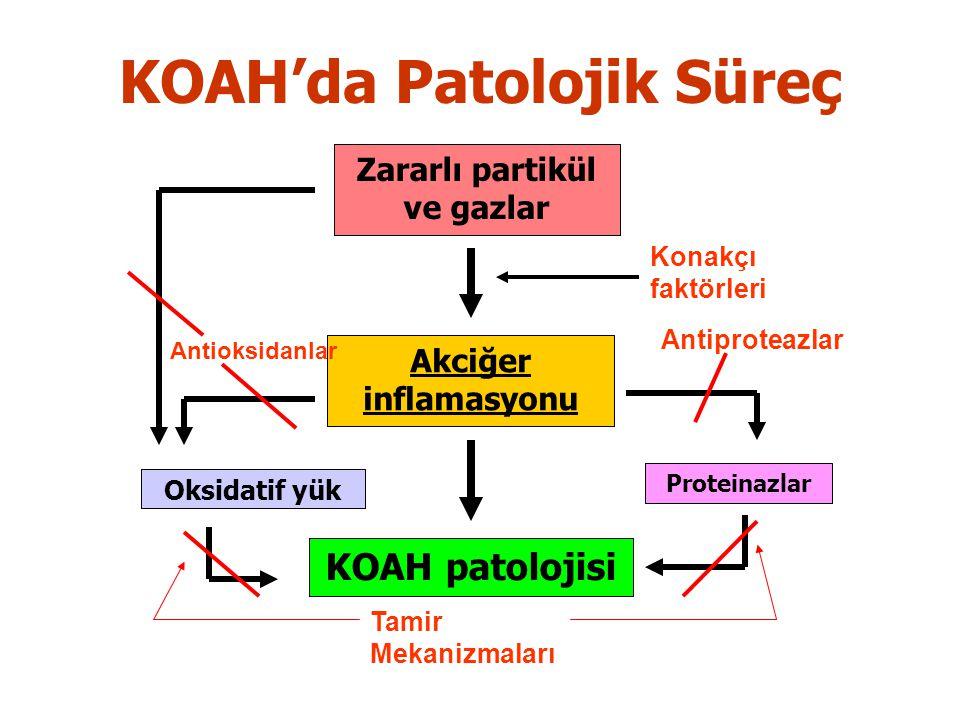 KOAH'da Patolojik Süreç