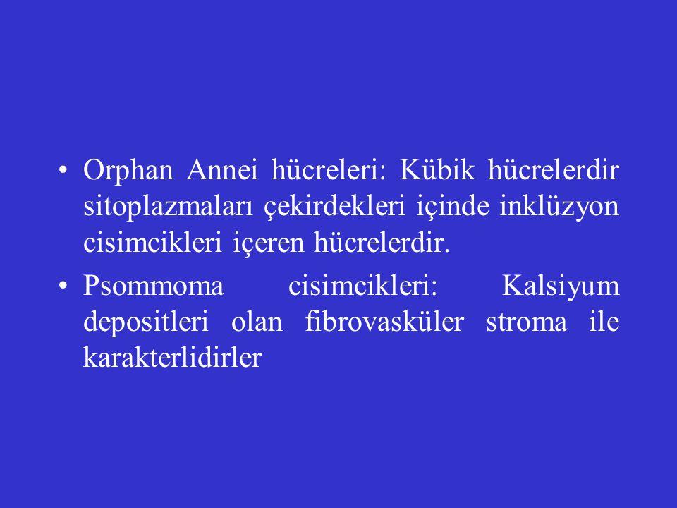 Orphan Annei hücreleri: Kübik hücrelerdir sitoplazmaları çekirdekleri içinde inklüzyon cisimcikleri içeren hücrelerdir.
