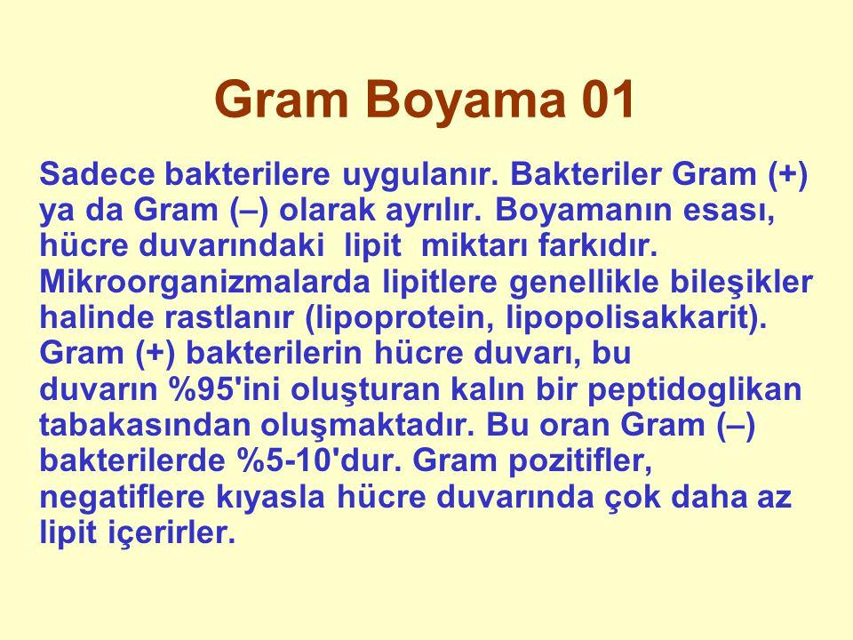 Gram Boyama 01