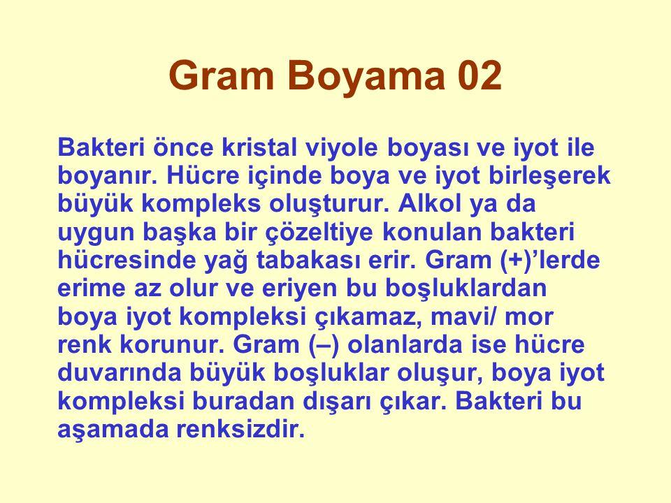 Gram Boyama 02