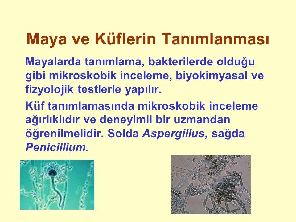Maya ve Küflerin Tanımlanması