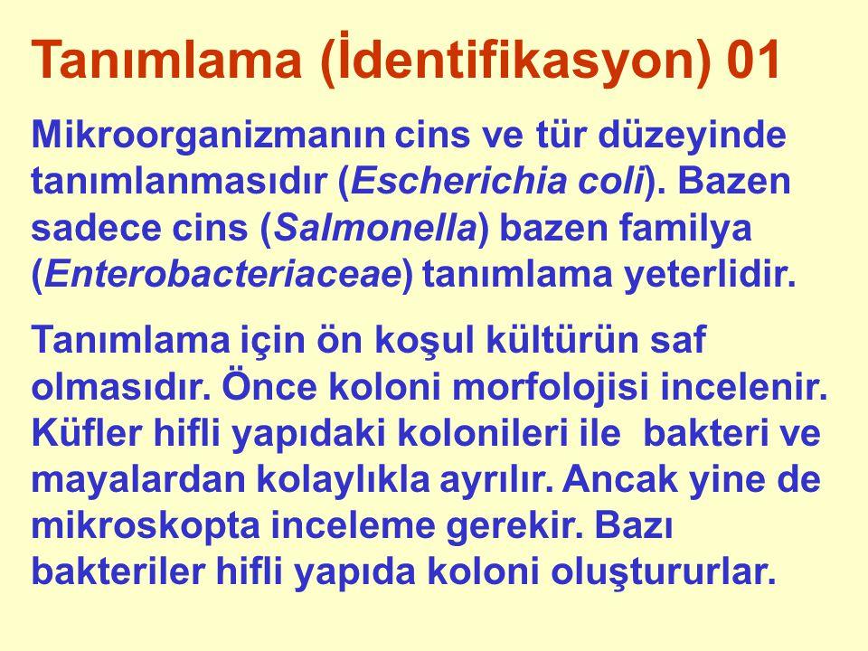 Tanımlama (İdentifikasyon) 01