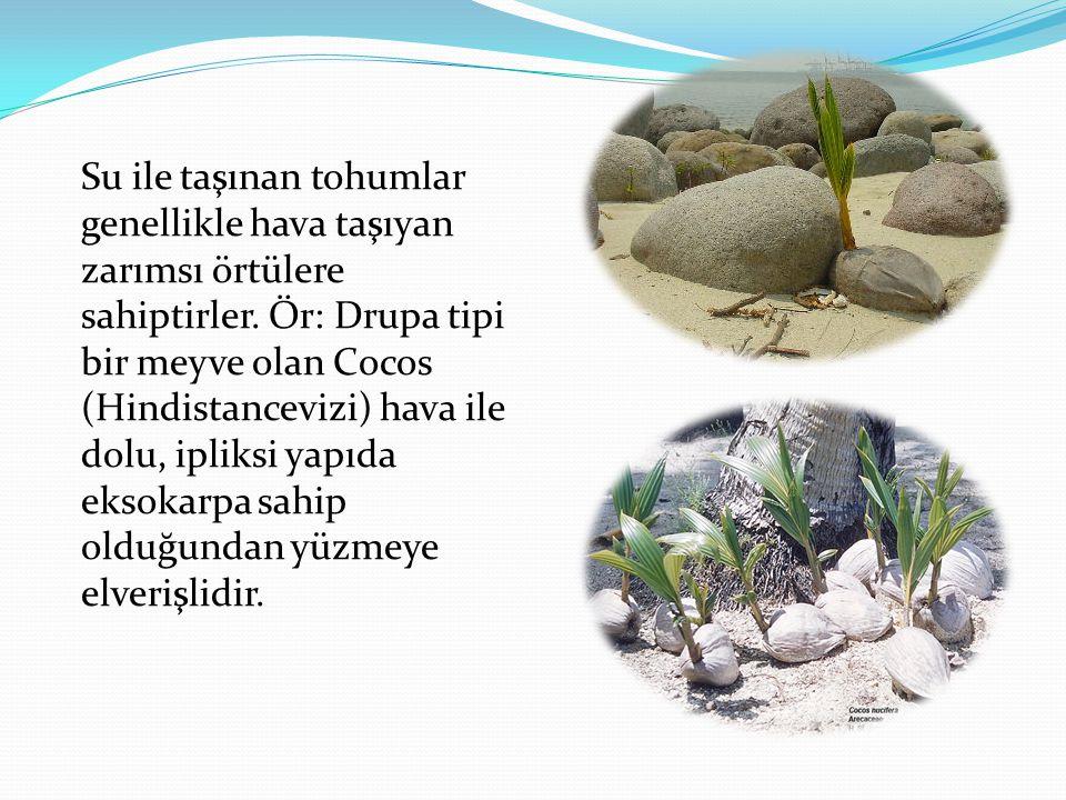 Su ile taşınan tohumlar genellikle hava taşıyan zarımsı örtülere sahiptirler.