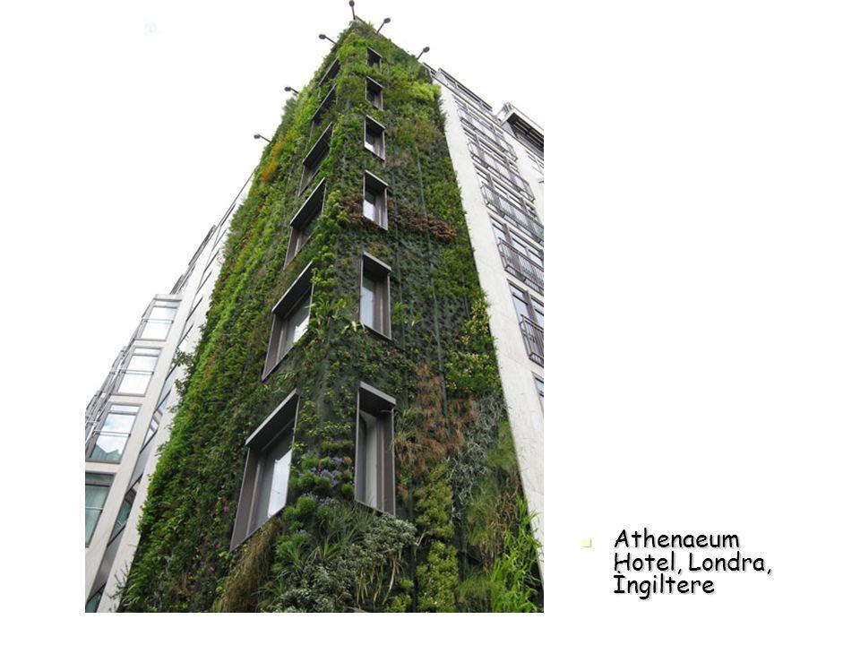 Athenaeum Hotel, Londra, İngiltere
