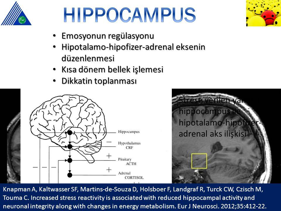 HIPPOCAMPUS Emosyonun regülasyonu