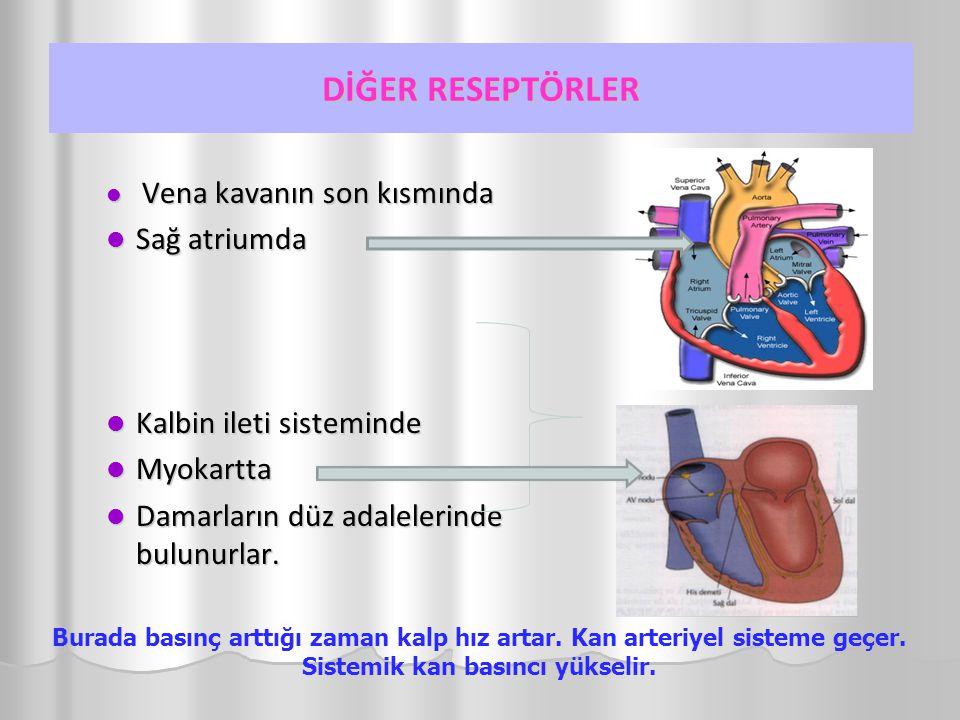 DİĞER RESEPTÖRLER Sağ atriumda Kalbin ileti sisteminde Myokartta