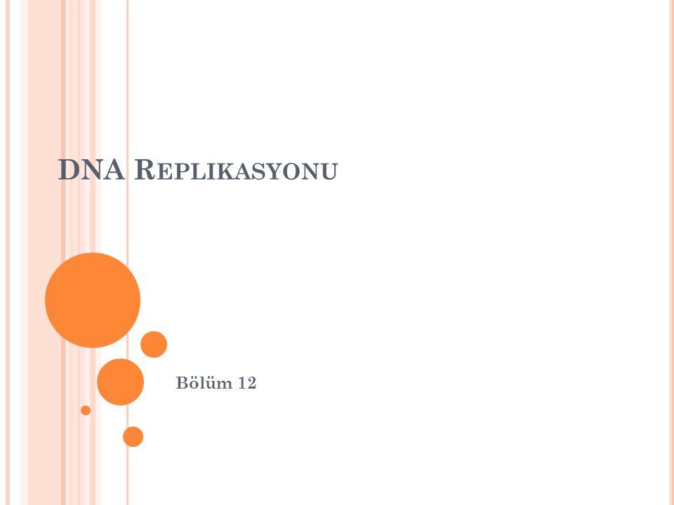 DNA Replikasyonu Bölüm 12