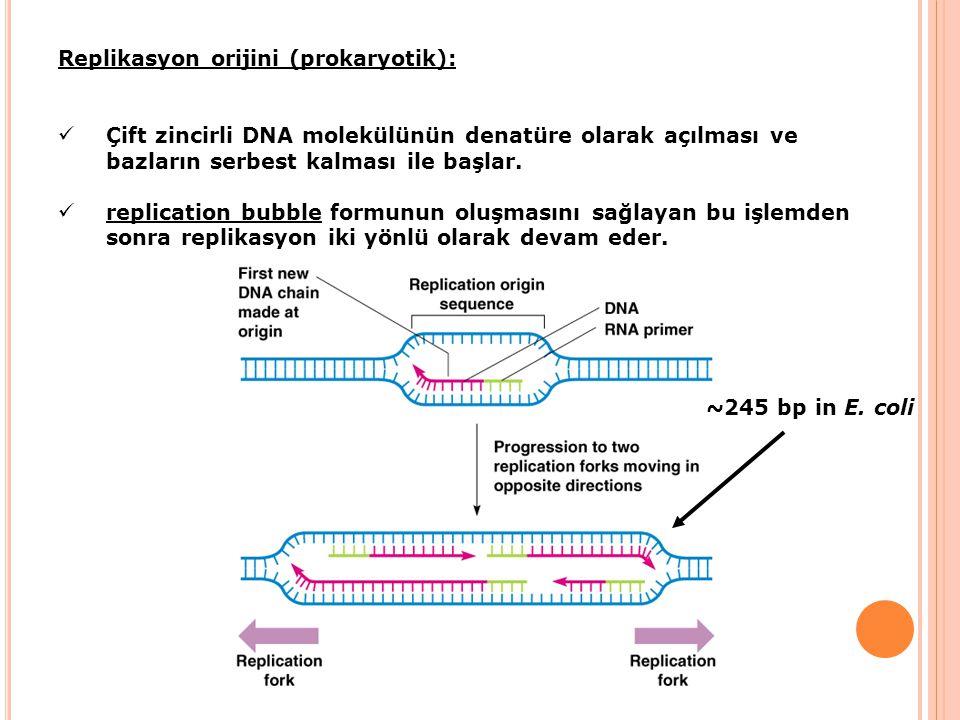 Replikasyon orijini (prokaryotik):
