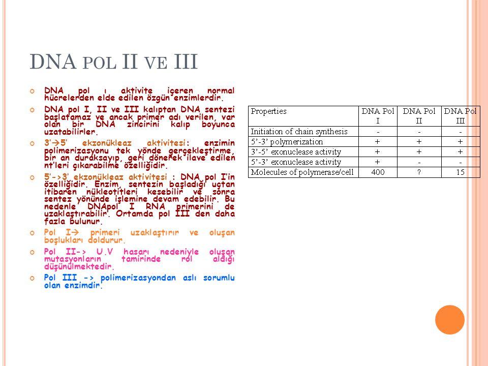 DNA pol II ve III DNA pol ı aktivite içeren normal hücrelerden elde edilen özgün enzimlerdir.