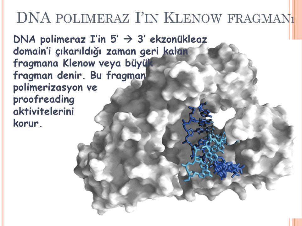 DNA polimeraz I'in Klenow fragmanı