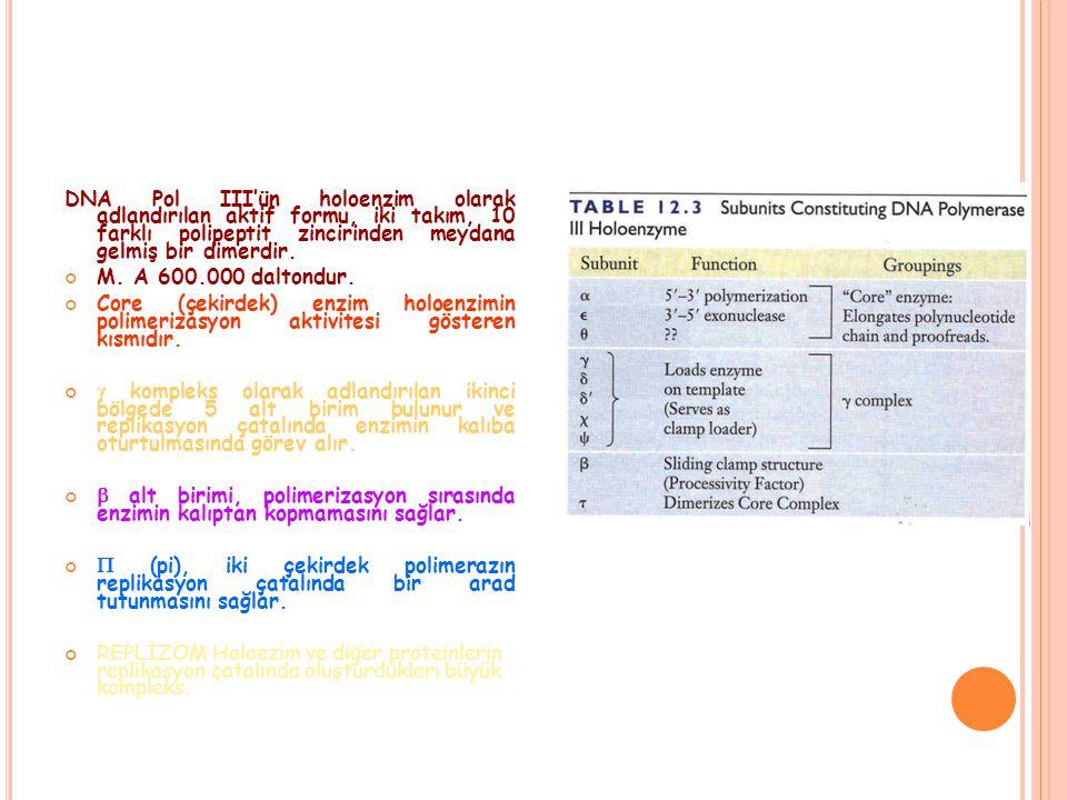 DNA Pol III'ün holoenzim olarak adlandırılan aktif formu, iki takım, 10 farklı polipeptit zincirinden meydana gelmiş bir dimerdir.