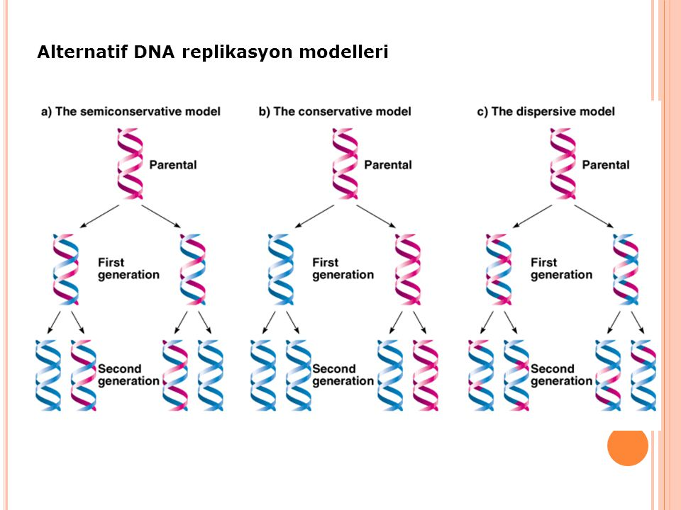 Alternatif DNA replikasyon modelleri