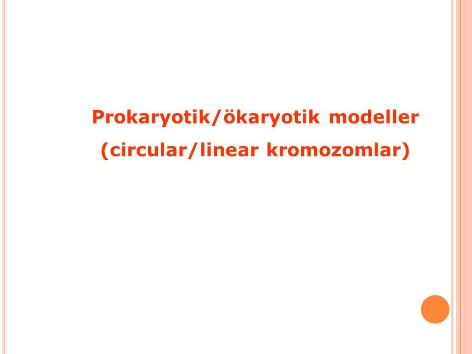 Prokaryotik/ökaryotik modeller (circular/linear kromozomlar)