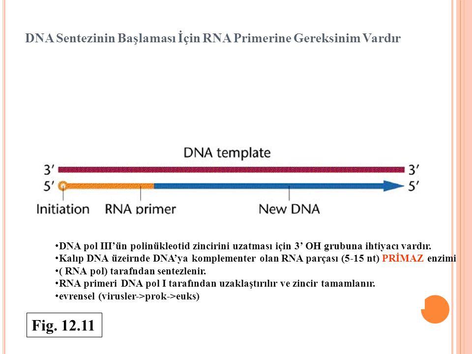 DNA Sentezinin Başlaması İçin RNA Primerine Gereksinim Vardır