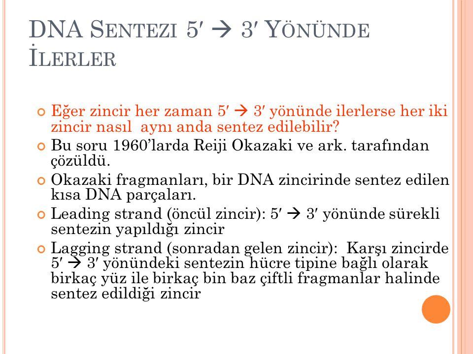 DNA Sentezi 5′  3′ Yönünde İlerler