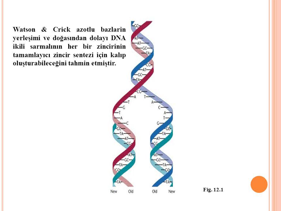 Watson & Crick azotlu bazlarin yerleşimi ve doğasından dolayı DNA ikili sarmalının her bir zincirinin tamamlayıcı zincir sentezi için kalıp oluşturabileceğini tahmin etmiştir.