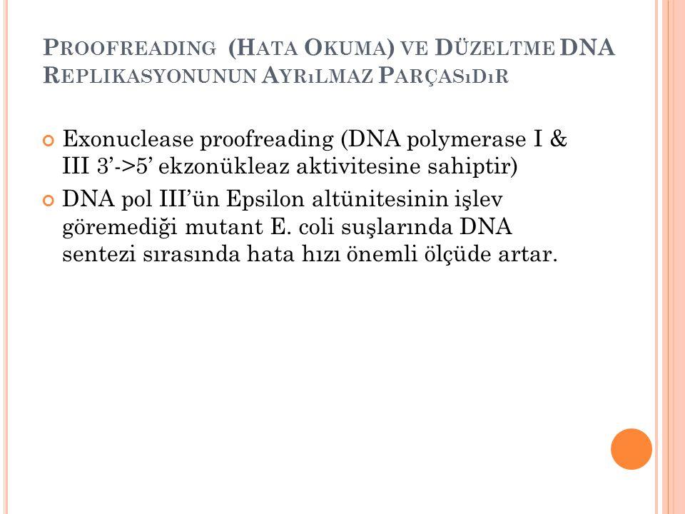 Proofreading (Hata Okuma) ve Düzeltme DNA Replikasyonunun Ayrılmaz Parçasıdır