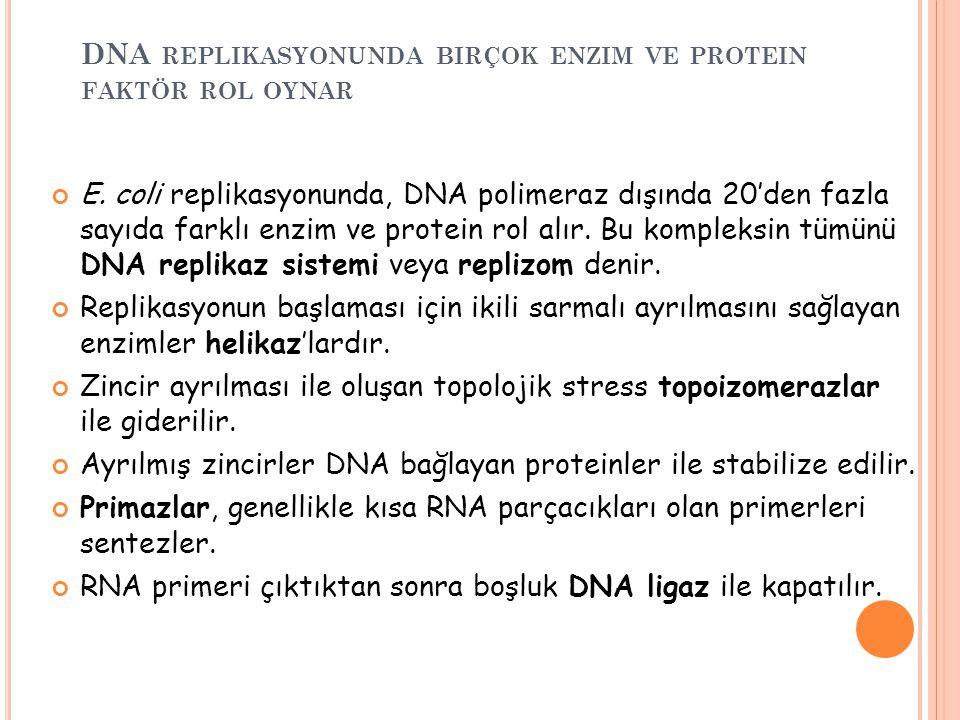 DNA replikasyonunda birçok enzim ve protein faktör rol oynar