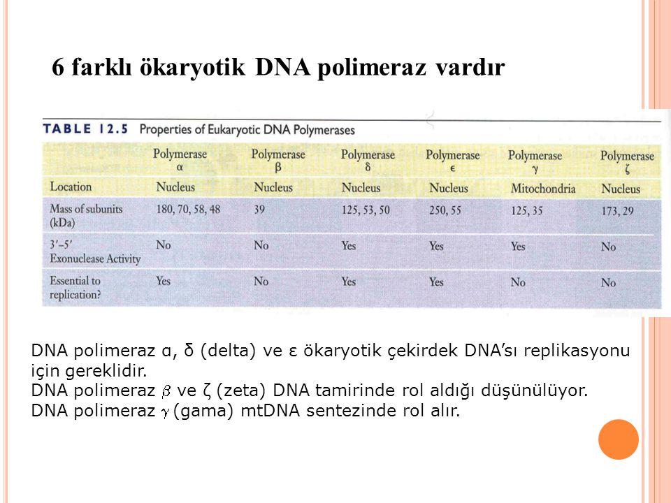 6 farklı ökaryotik DNA polimeraz vardır