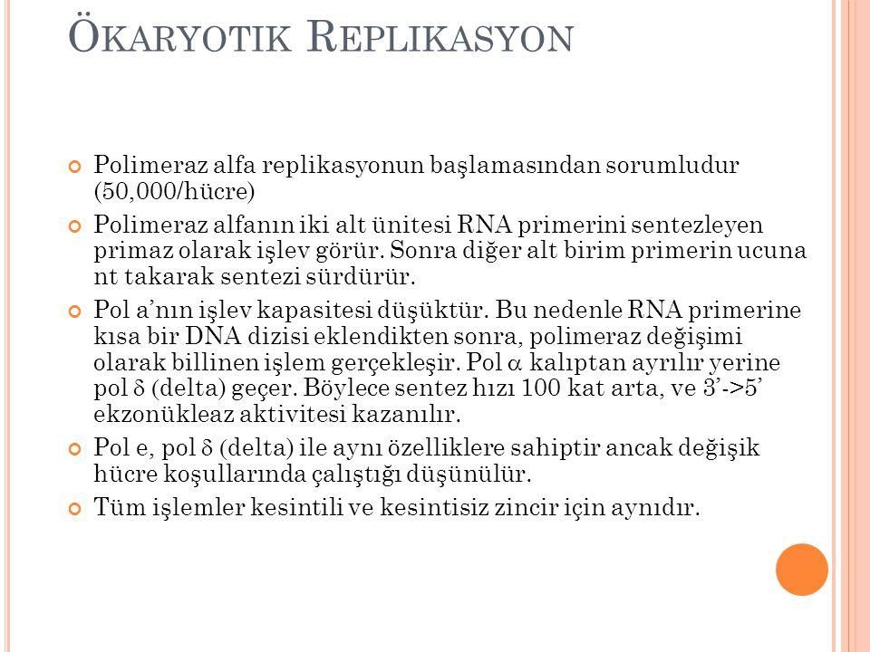 Ökaryotik Replikasyon