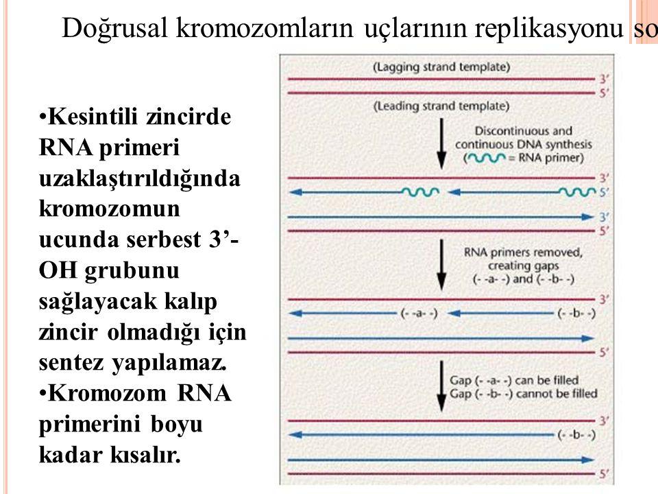 Doğrusal kromozomların uçlarının replikasyonu sorunludur