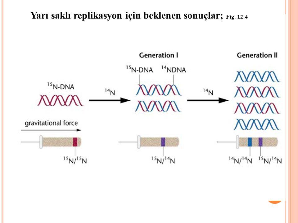 Yarı saklı replikasyon için beklenen sonuçlar; Fig. 12.4