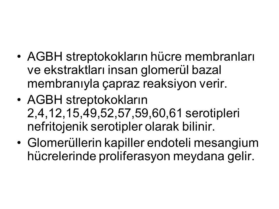 AGBH streptokokların hücre membranları ve ekstraktları insan glomerül bazal membranıyla çapraz reaksiyon verir.