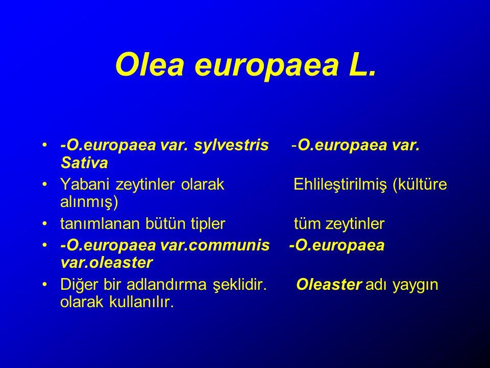 Olea europaea L. -O.europaea var. sylvestris -O.europaea var. Sativa