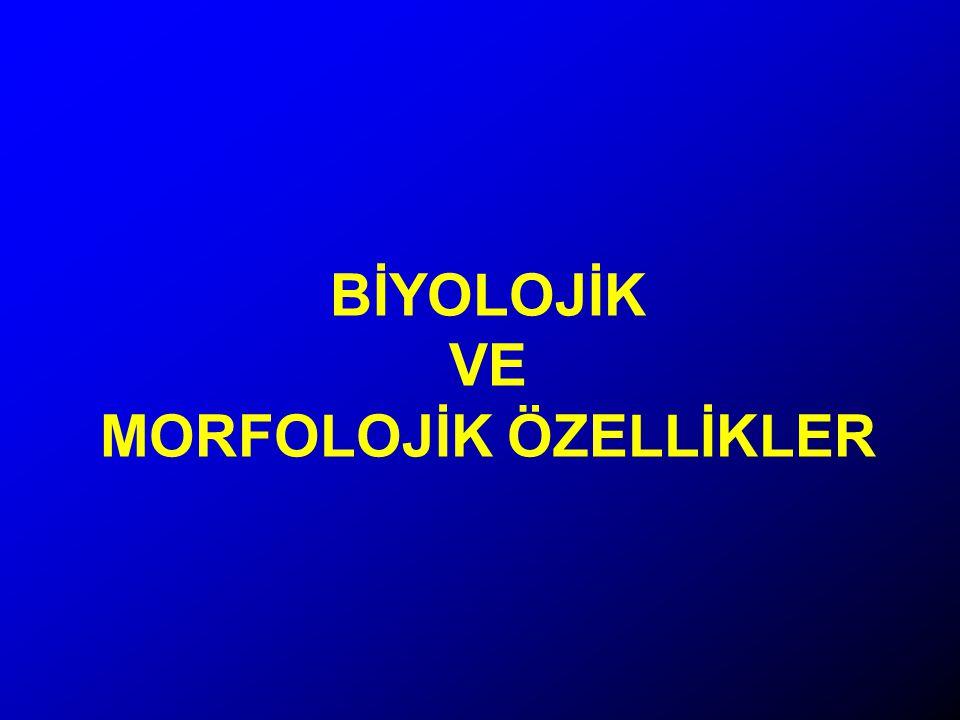 BİYOLOJİK VE MORFOLOJİK ÖZELLİKLER