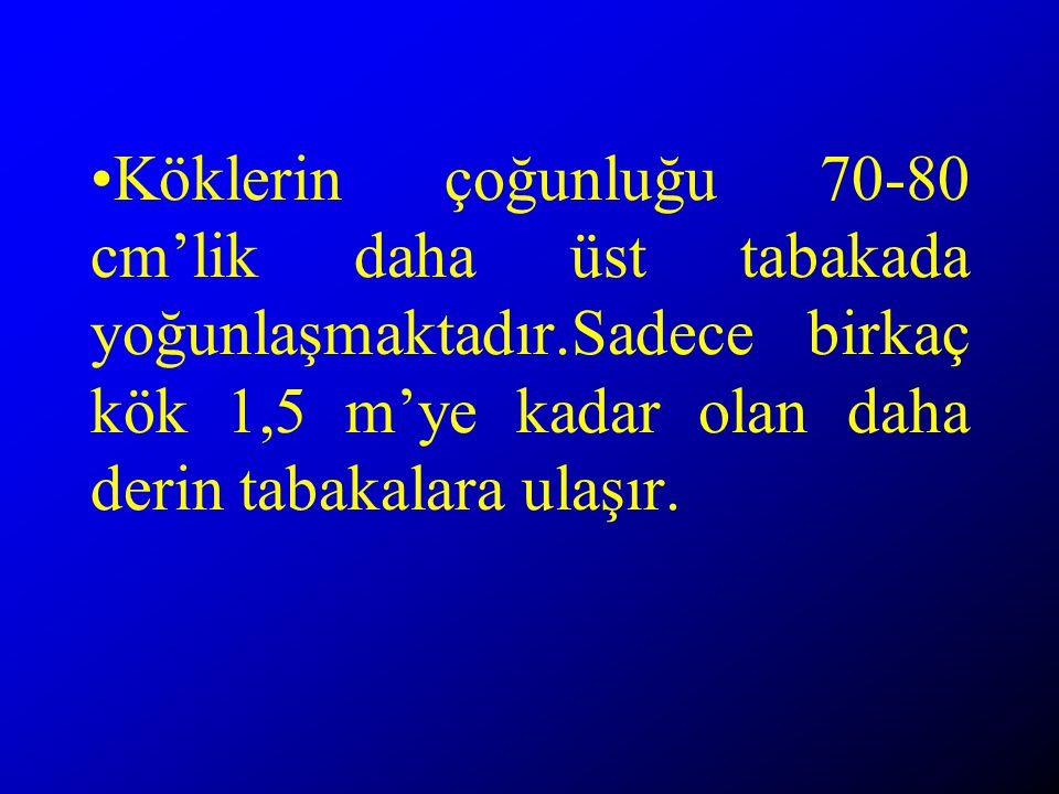 Köklerin çoğunluğu 70-80 cm'lik daha üst tabakada yoğunlaşmaktadır